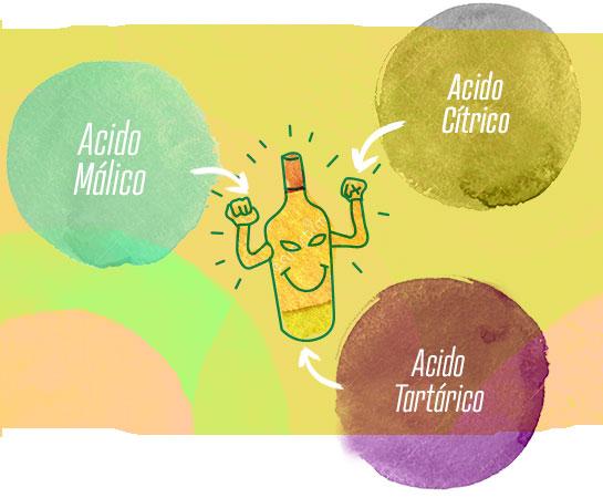 Por qué es importante la acidez en los vinos